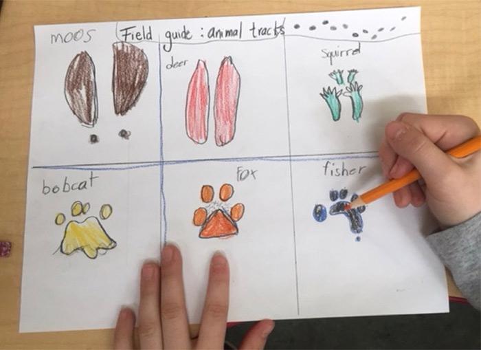 Formation scolaires sur le suivi faunique québécois
