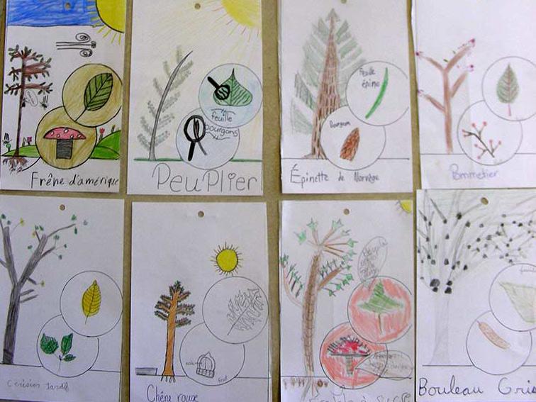 Formation scolaire sur la flore québecoise